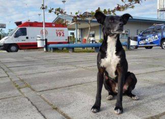 Perro espera fuera de un hospital a su humano fallecido