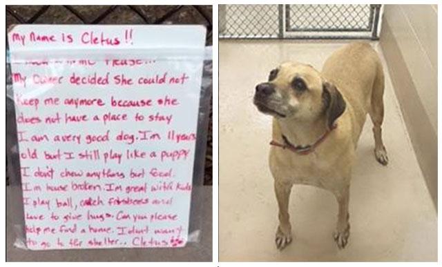 Perro fue abandonado junto a su caja de juguetes y una nota
