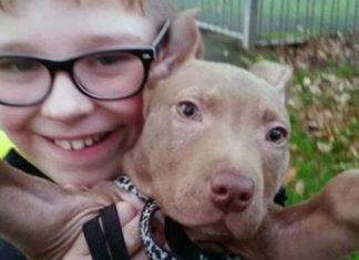 Perro incautado por parecer pit bull regresará con su familia