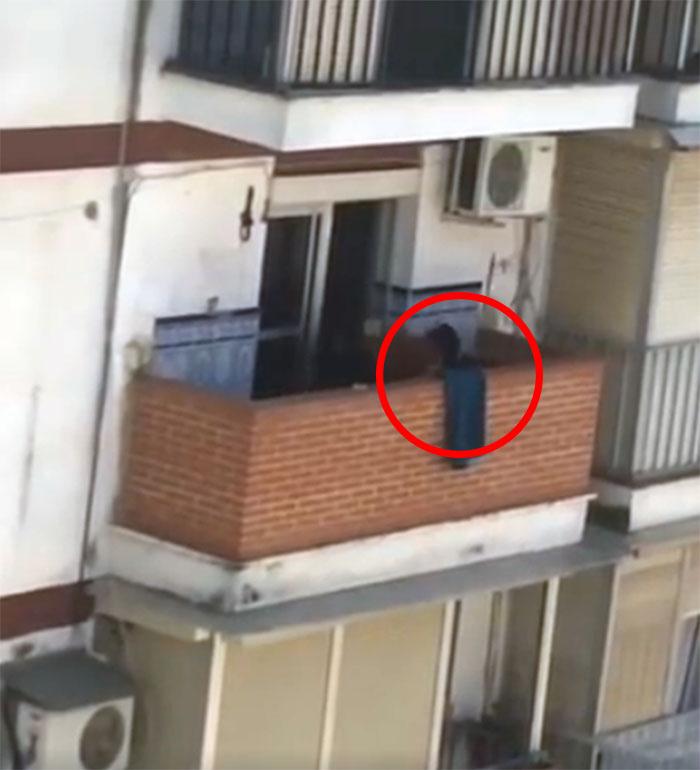 Perro maltratado en un balcón