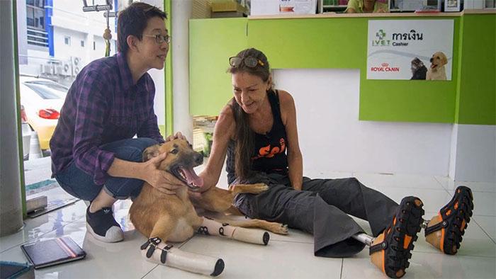 Perro recibe prótesis luego de perder sus patas