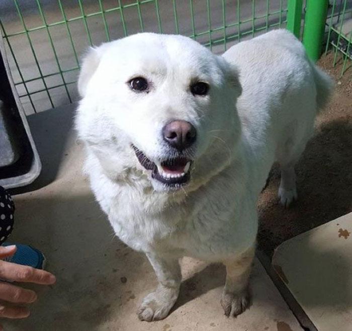 Perro rescatado de una granja en Corea