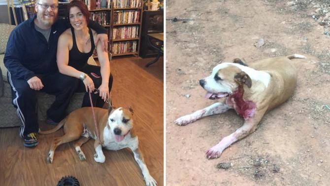 Perro sin hogar salvó a una mujer de ser apuñalada y ahora tiene una familia