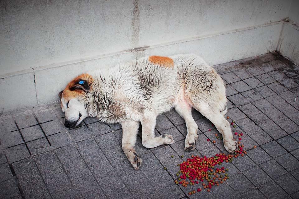 Perro sin hogar