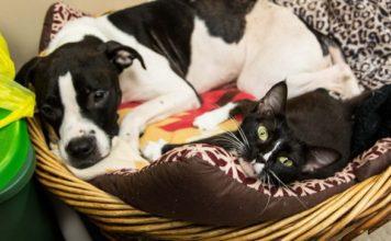 Perro y gato amigos inseparables fueron adoptados