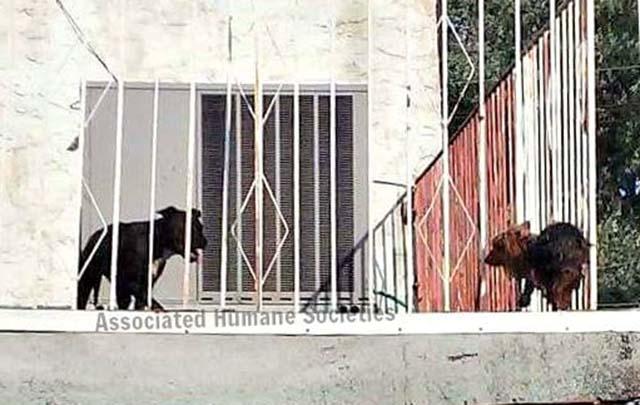 Perros dejados en una terraza a altas temperaturas