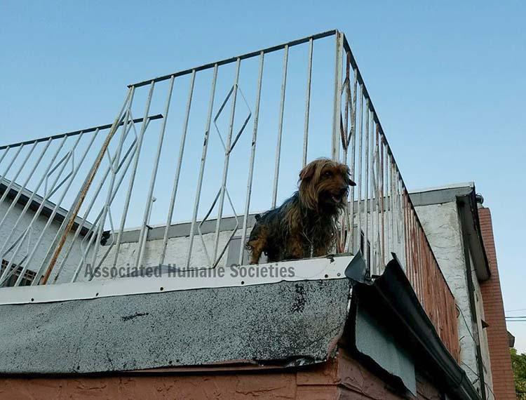 Perros estaban cubiertos de alquitrán en una terraza