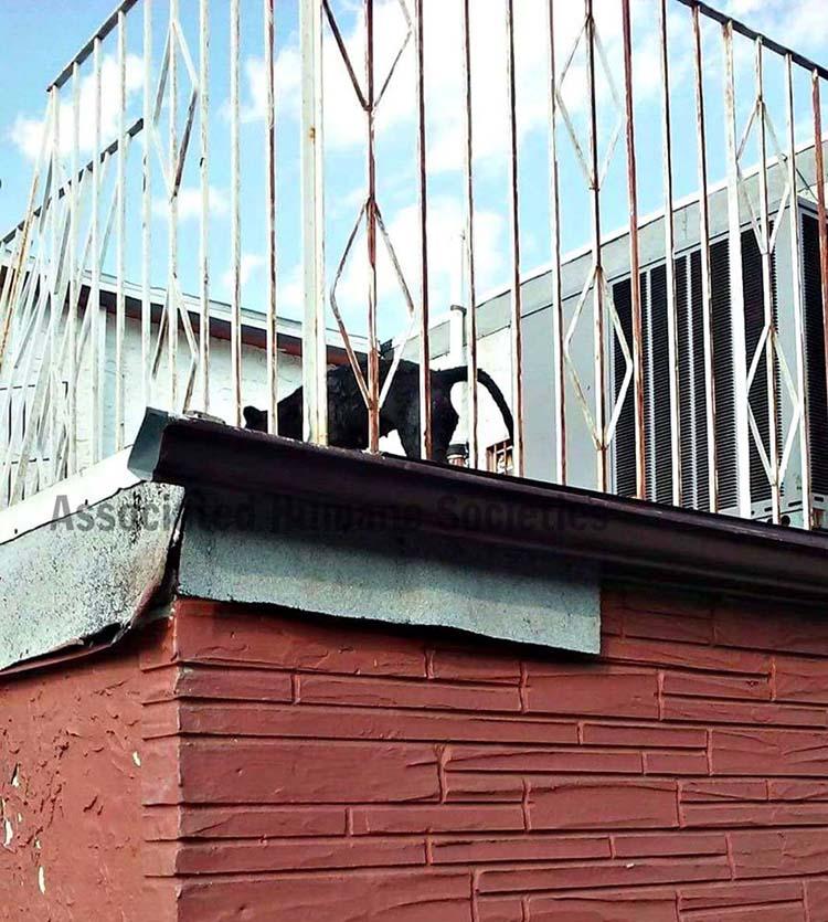 Perros fueron dejados bajo el sol en una terraza