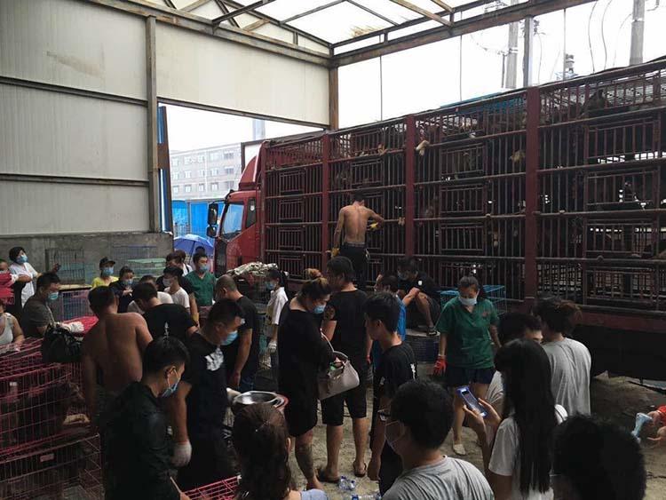 Perros rescatados de un camión en una carretera en China