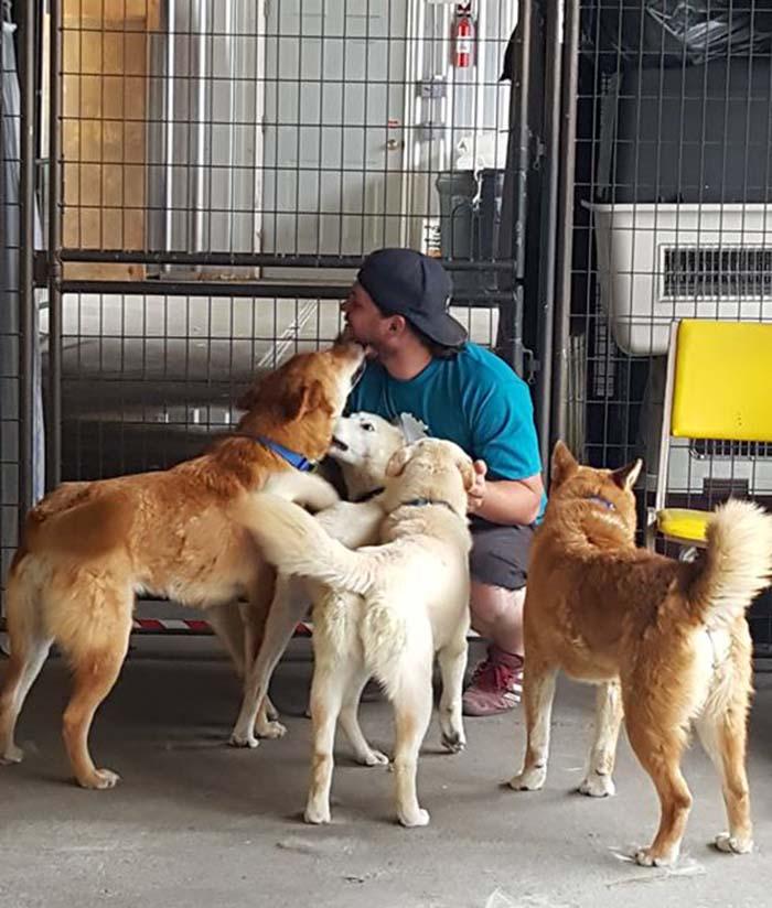 Perros rescatados de una granja en Corea