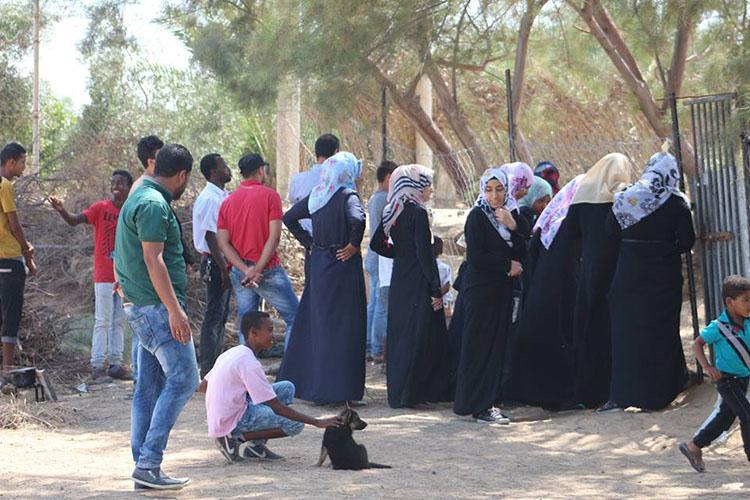 Perros rescatados en la franja de gaza