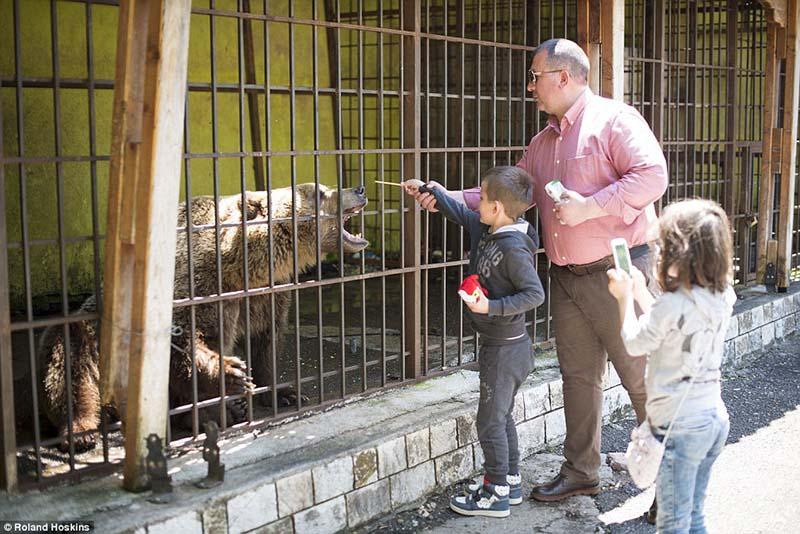 Personas alimentan oso
