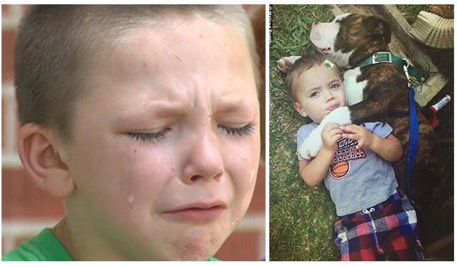 Policía asesinó al perro de un niño de 5 años en su cumpleaños