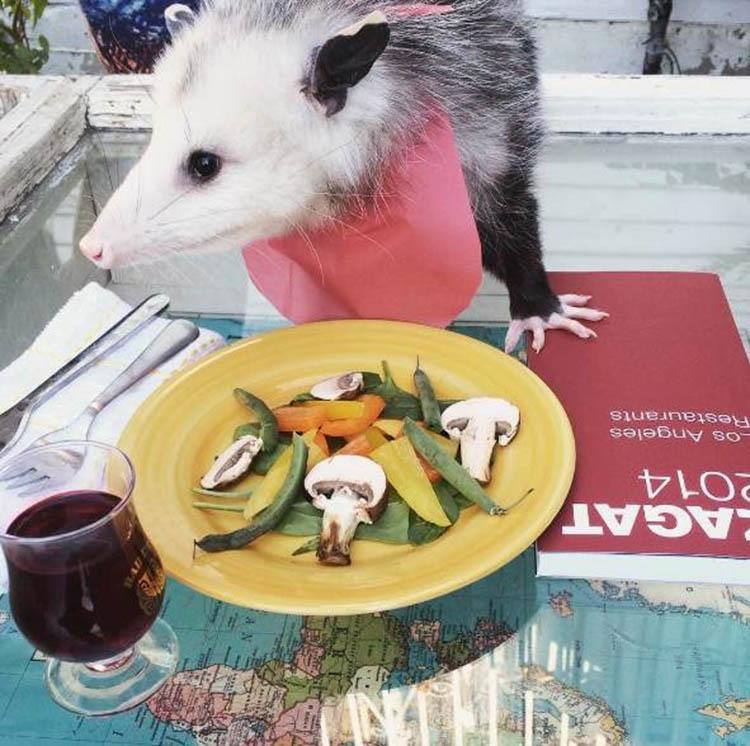 Poppy comiendo