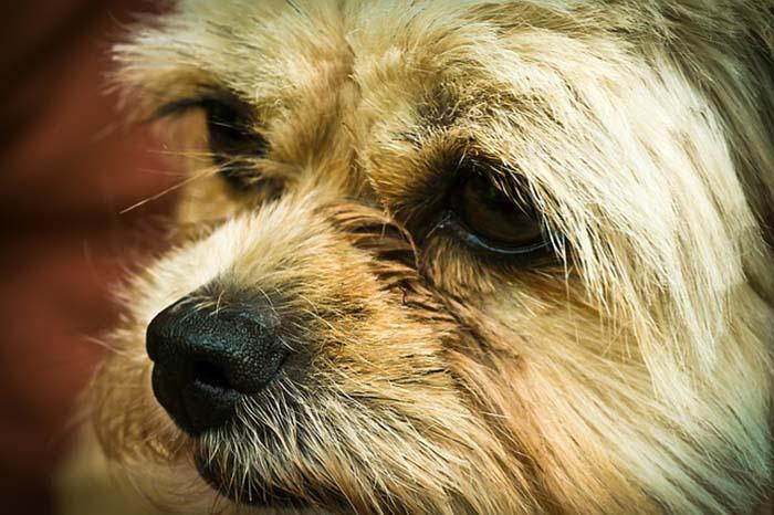 Prohibir consumo de carne de perro