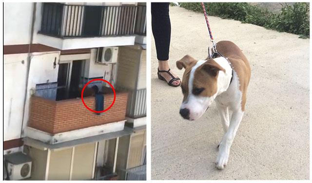 Rescatan a un perro maltratado constantemente en un balcón