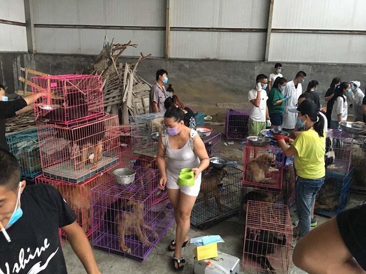 Rescataron 300 perros de un camión con destino al matadero