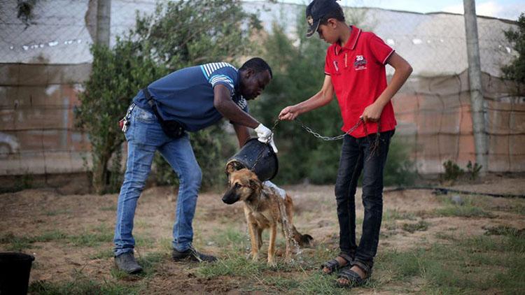 Saeed el Aer bañando a un perro rescatado