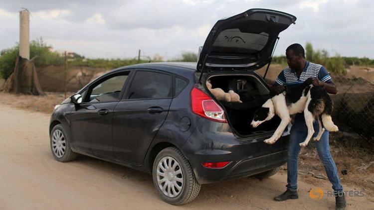 Saeed el Aer rescatando perros en las calles de Gaza