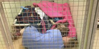 Trabajador de un refugio reconforta a una perrita abandonada