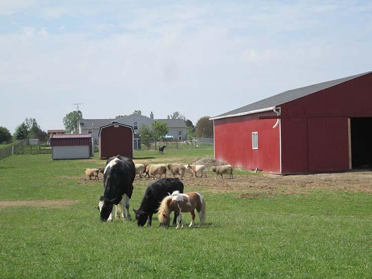 Vaca y otros animales
