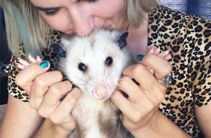 Zarigüeya rescatada ama a su familia