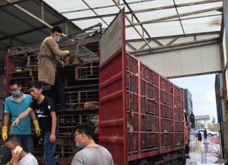 detuvieron un camión con 300 perros destinados para el sacrificio
