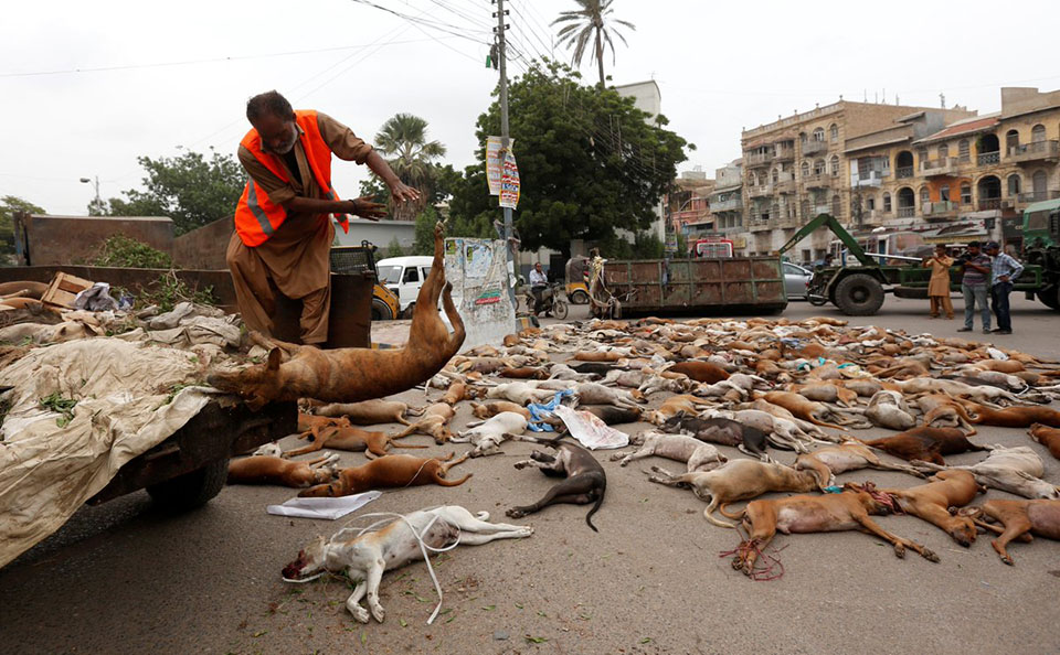 700 perros asesinados