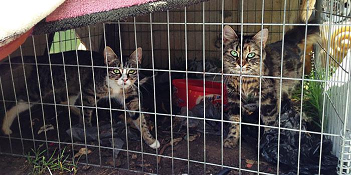 Animales rescatados de fábrica de gatos