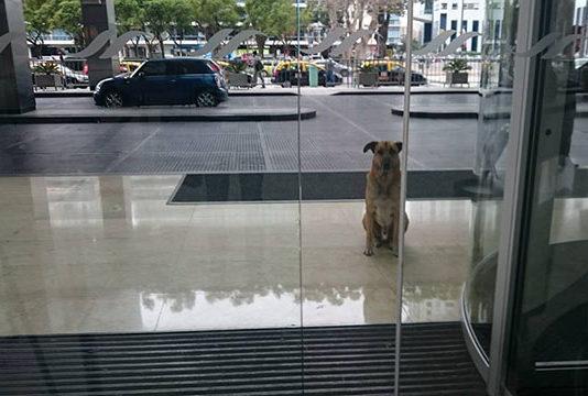 Azafata alemana adopta a un perro sin hogar que la esperaba después de cada vuelo