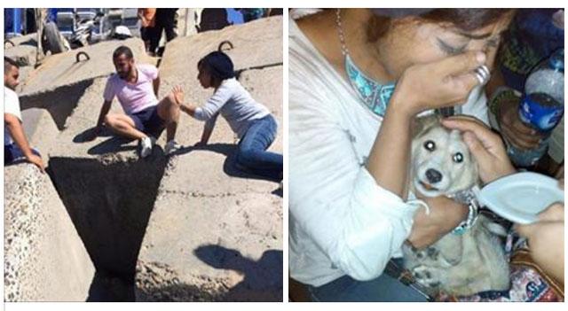 Cachorro atrapado decajo de rocas fue rescatado