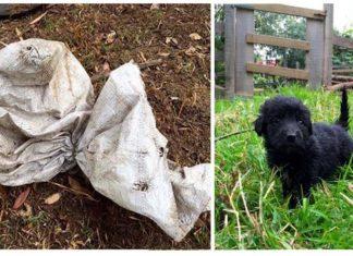 Cachorros abandonados dentro de una bolsa tienen otra oportunidad