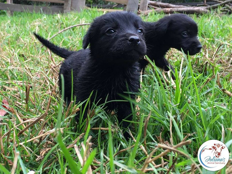 Cachorros en un santuario
