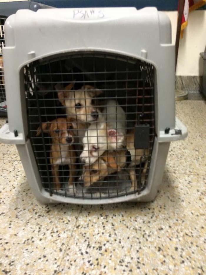Cachorros rescatados