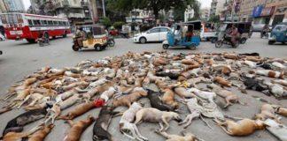 Cerca de 700 perros fueron envenenados en Pakistán