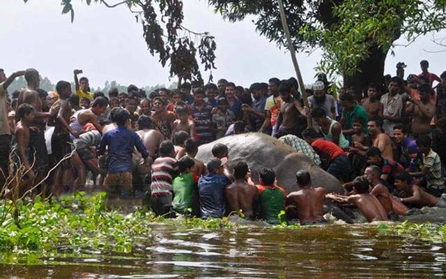 Cientos de aldeanos se unen para salvar a un elefante de ahogarse