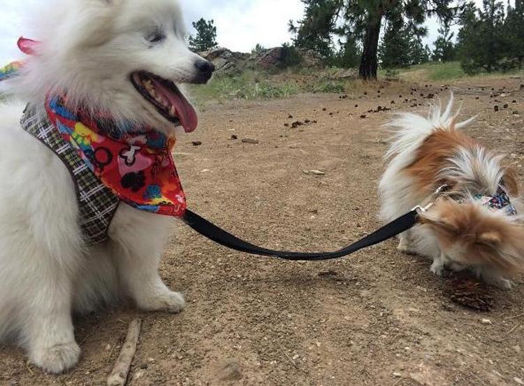 Compañerismo entre Zen y Hoshi