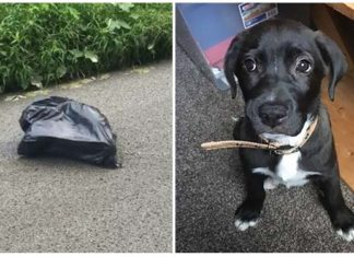 Encontró a un cachorro abandonado dentro de una bolsa de basura en la carretera