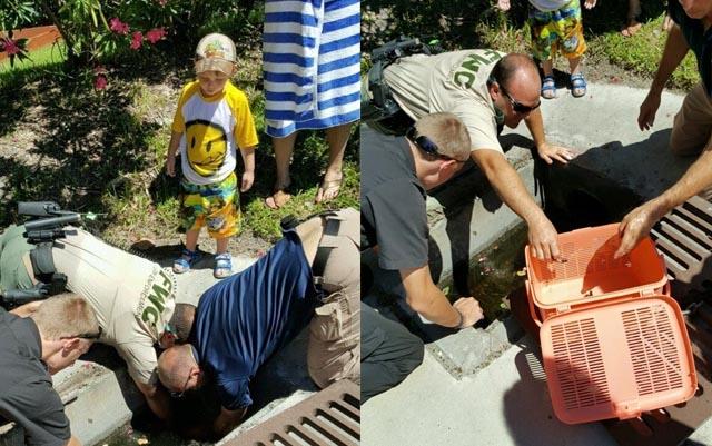 Este pequeño héroe halló tortugas marinas bebé y gracias a su ayuda se encuentran a salvo