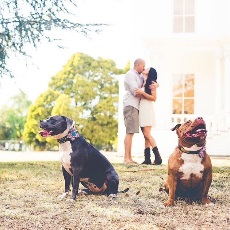 Familia y perros