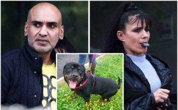 Fueron condenados por forzar a su perro a vivir entre las heces