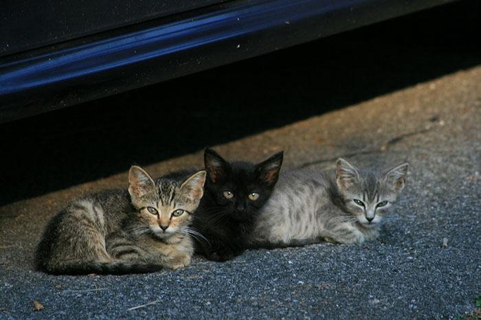 Gatitos sin hogar