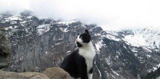 Gato guió a un hombre perdido en las montañas en Suiza
