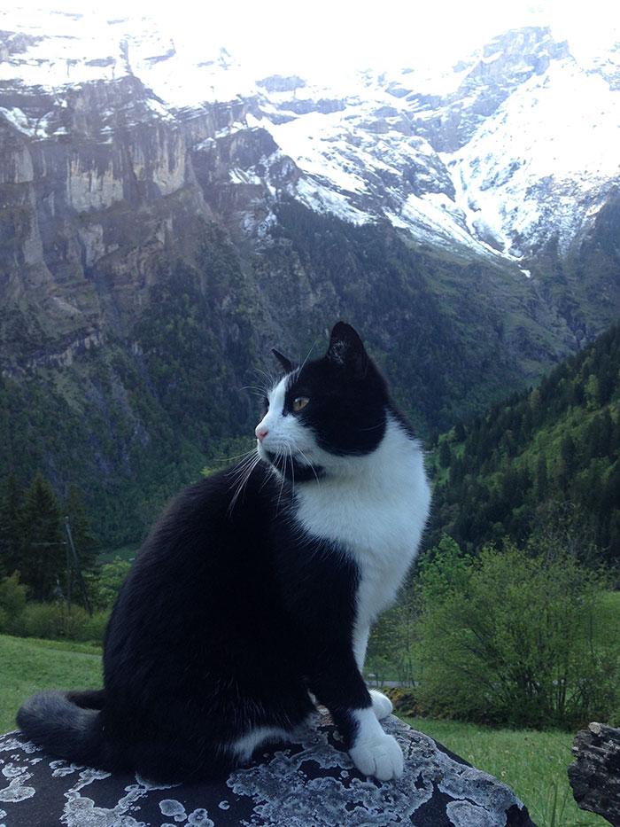 Gato mostró el camino a un turista