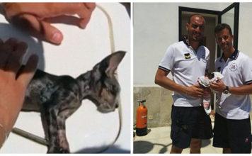 Guardia costera revivió a un gatito en italia