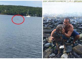 Hombre salva a una perra desorientada en el mar