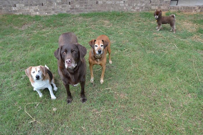 Jag y sus hermanos