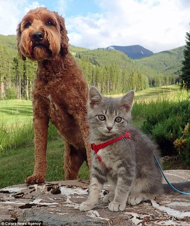 Jessie y Koda de aventuras