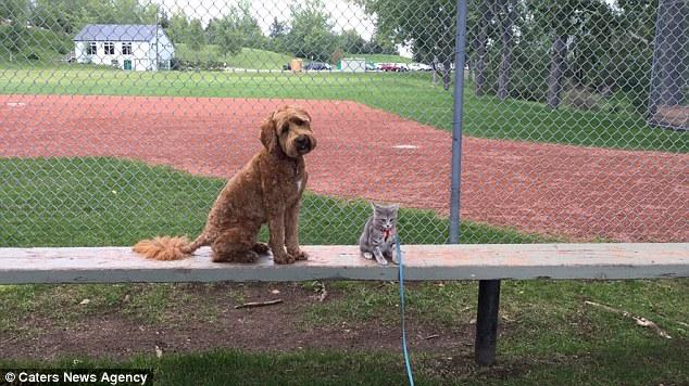 Jessie y Koda en el parque