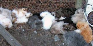 Las fábricas de gatitos son lugares horribles